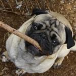 Need a stick momma?