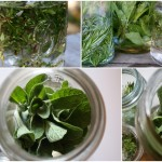 Herb infused vodka